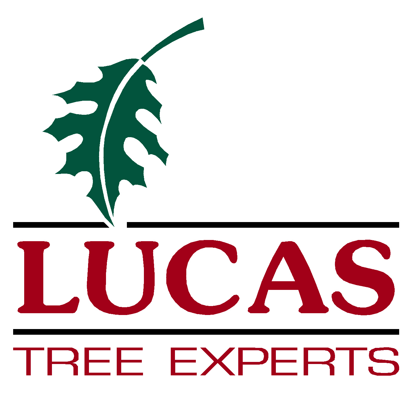 Lucas Tree Experts